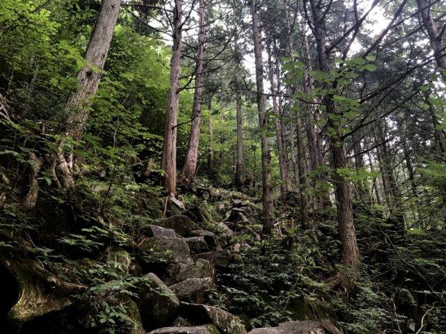 小秀山 ニノ谷登山道 石の道