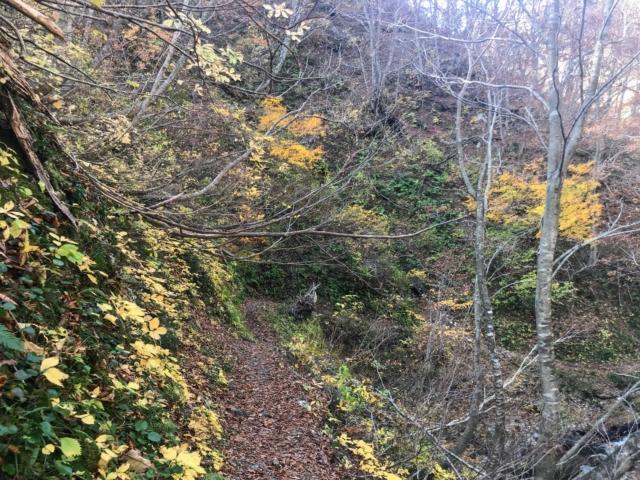 夜叉ヶ池 登山道 紅葉