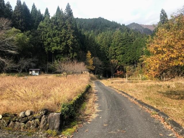 岩岳 登山口への道 麦畑