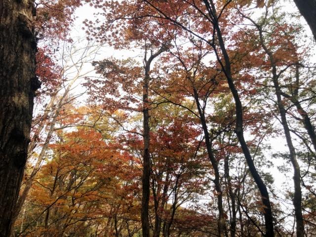 岩岳 東斜面の紅葉