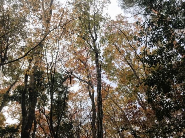 岩岳 頭上の紅葉