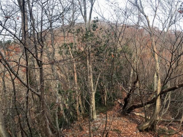 岩岳 登山道 前衛峰
