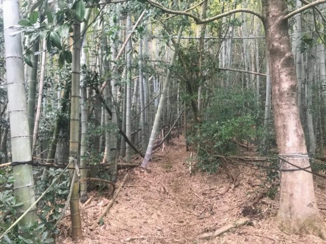 如来ヶ岳 登山道 竹林