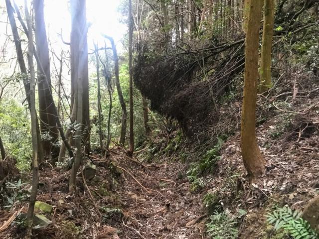 如来ヶ岳 八幡神社ルート ギリギリ木