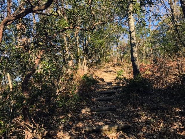 伊木山 花咲く稜線の道 丸太階段