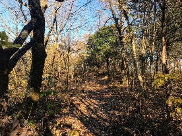 伊木山 花咲く稜線の道 山頂部