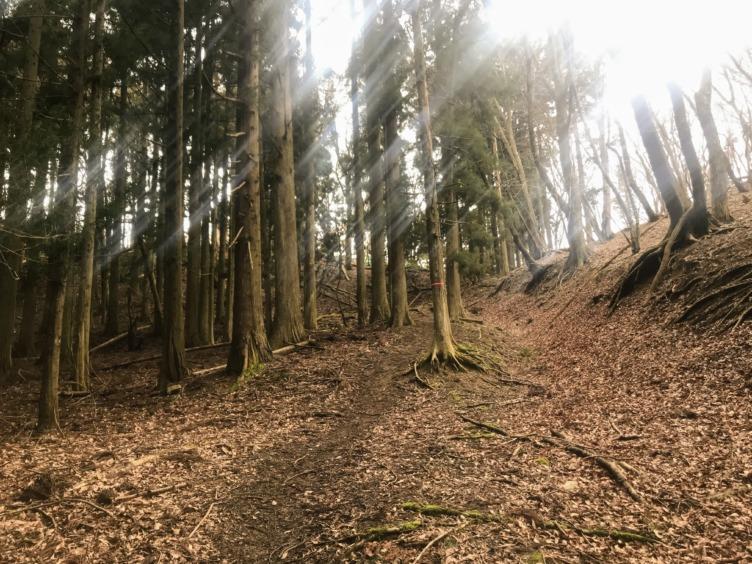 鍋尻山 保月ルート 登山道