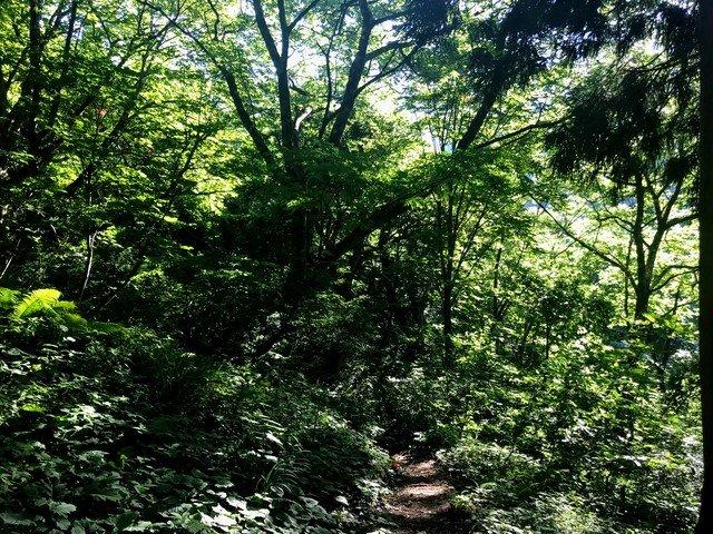 三ノ峰~別山 上小池ルート 登山道