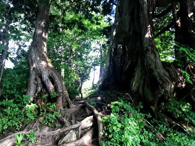 三ノ峰~別山 上小池ルート 六本檜